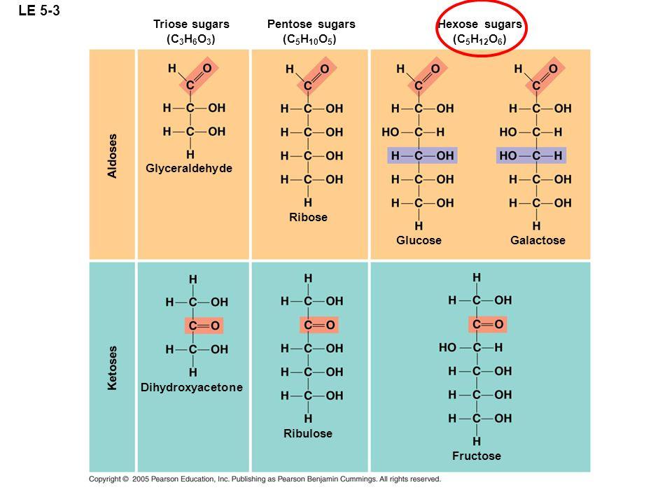 LE 5-3 Triose sugars (C 3 H 6 O 3 ) Glyceraldehyde Aldoses Ketoses Pentose sugars (C 5 H 10 O 5 ) Ribose Hexose sugars (C 5 H 12 O 6 ) Glucose Galacto