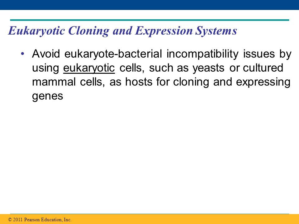Copyright © 2005 Pearson Education, Inc. publishing as Benjamin Cummings Eukaryotic Cloning and Expression Systems Avoid eukaryote-bacterial incompati