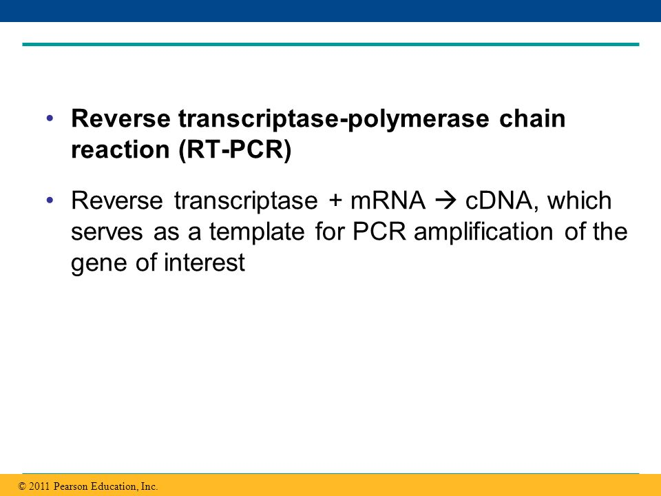 Copyright © 2005 Pearson Education, Inc. publishing as Benjamin Cummings Reverse transcriptase-polymerase chain reaction (RT-PCR) Reverse transcriptas