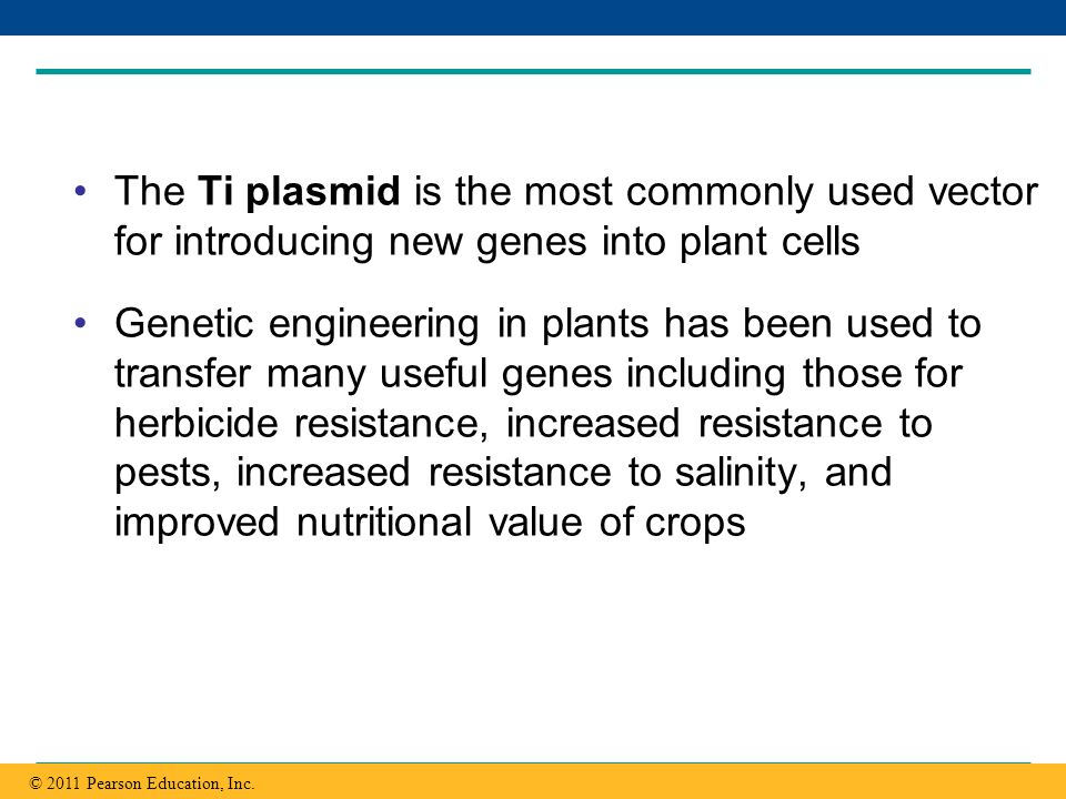 Copyright © 2005 Pearson Education, Inc. publishing as Benjamin Cummings The Ti plasmid is the most commonly used vector for introducing new genes int