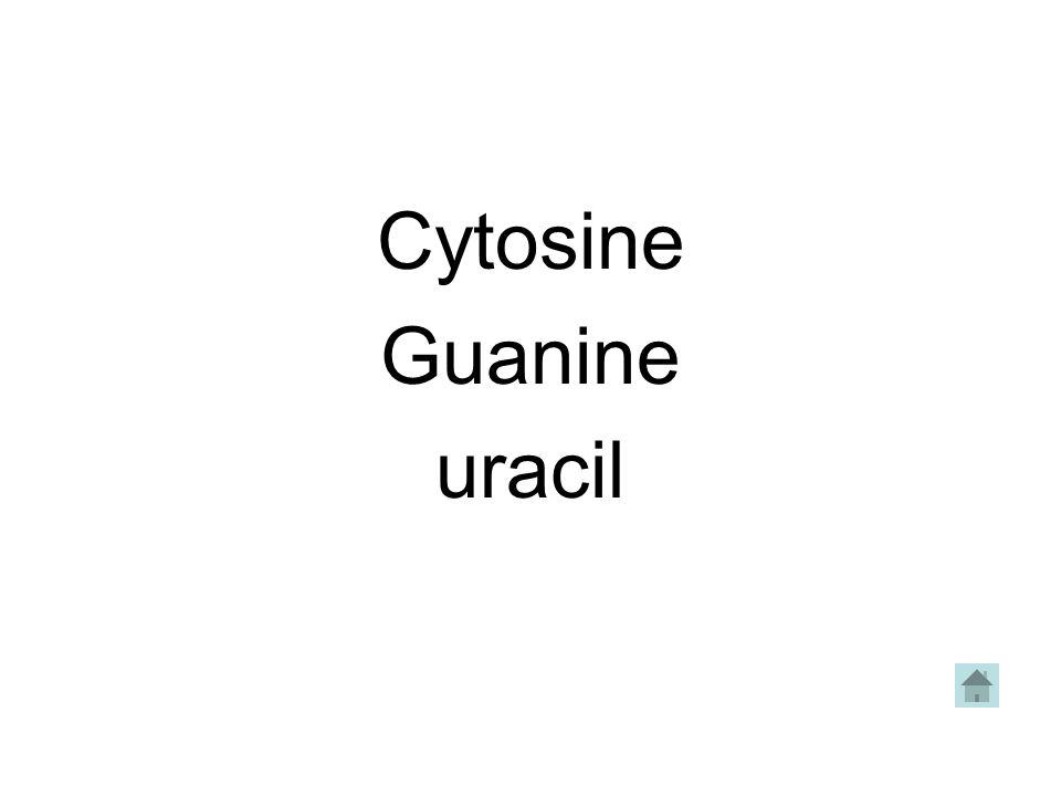 Cytosine Guanine uracil