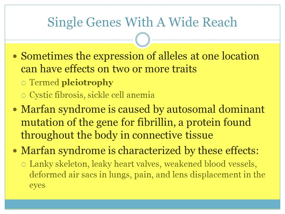Single Genes With A Wide Reach Sometimes the expression of alleles at one location can have effects on two or more traits Termed pleiotrophy Cystic fi