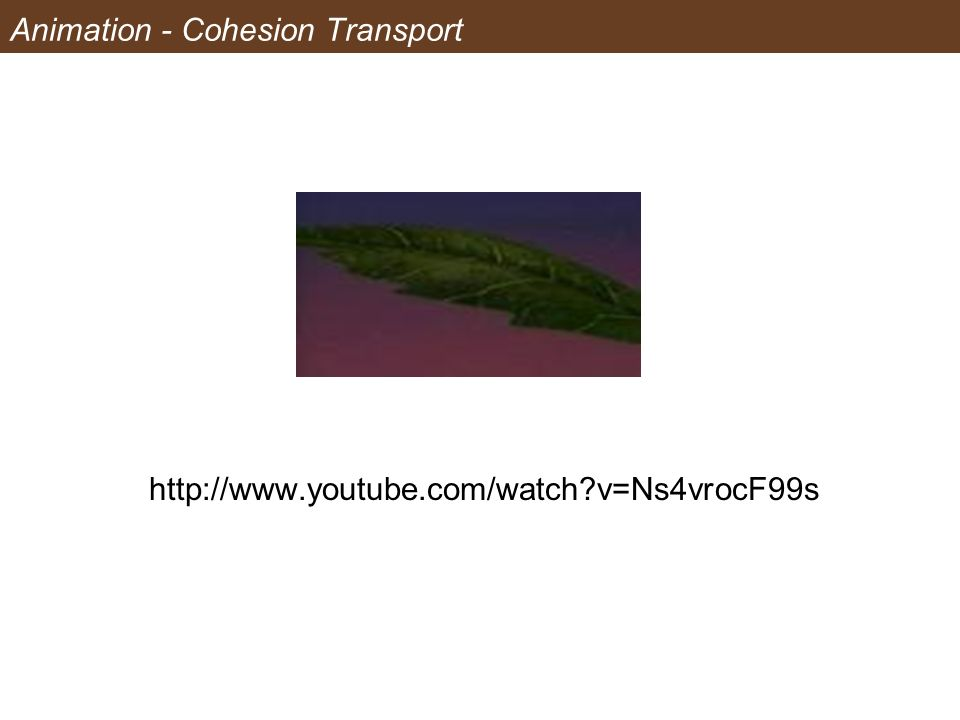 Animation - Cohesion Transport http://www.youtube.com/watch?v=Ns4vrocF99s