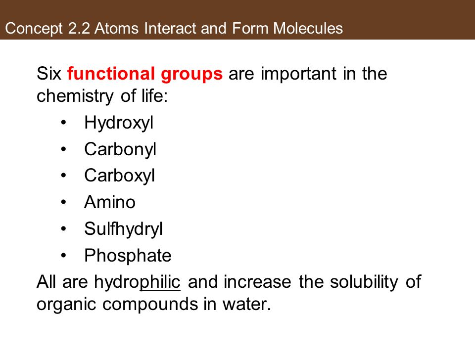 Concept 2.2 Atoms Interact and Form Molecules Six functional groups are important in the chemistry of life: Hydroxyl Carbonyl Carboxyl Amino Sulfhydry