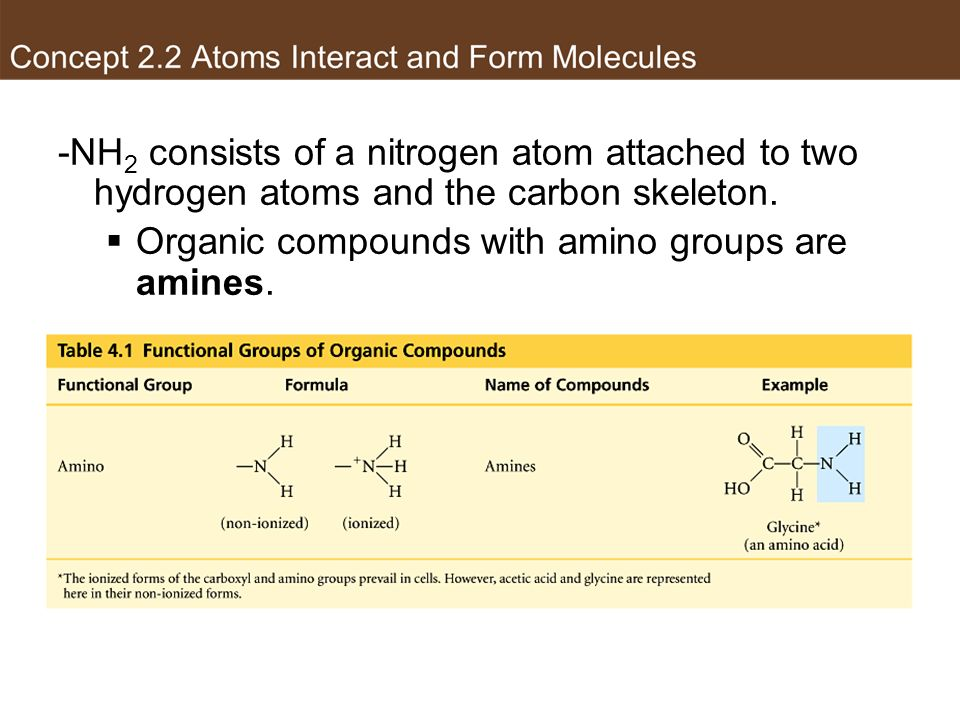 -NH 2 consists of a nitrogen atom attached to two hydrogen atoms and the carbon skeleton. Organic compounds with amino groups are amines. Amino group
