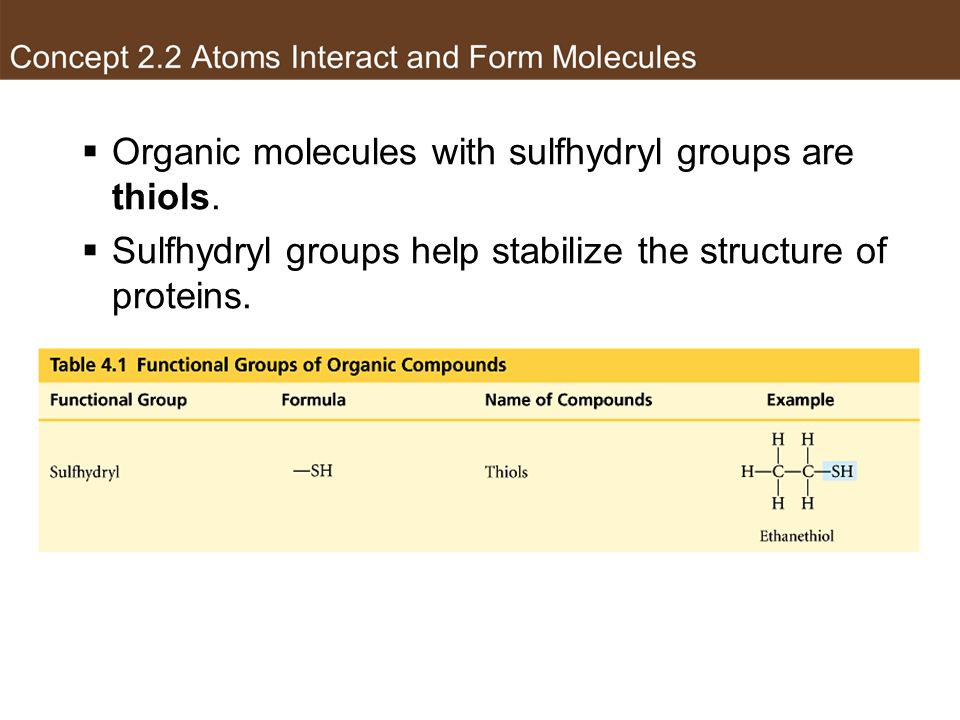 Organic molecules with sulfhydryl groups are thiols. Sulfhydryl groups help stabilize the structure of proteins. Sulfhydryl group