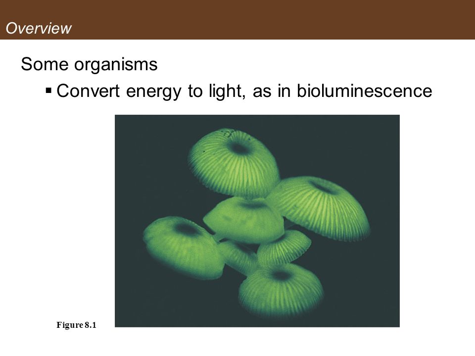 Overview Some organisms Convert energy to light, as in bioluminescence Figure 8.1