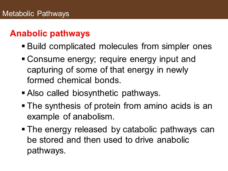 Metabolic Pathways Anabolic pathways Build complicated molecules from simpler ones Consume energy; require energy input and capturing of some of that