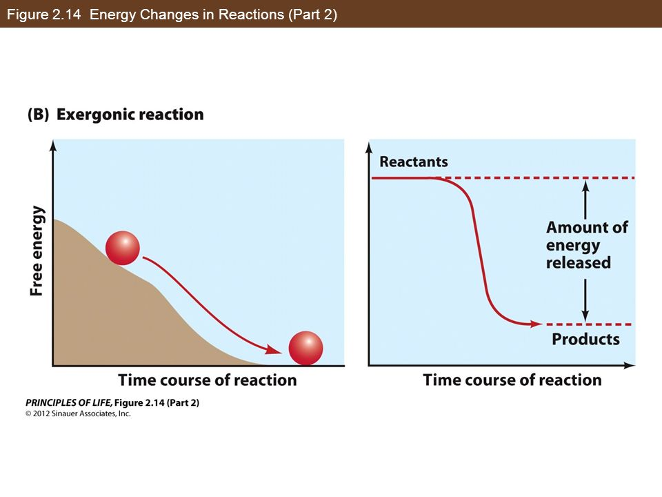 Figure 2.14 Energy Changes in Reactions (Part 2)