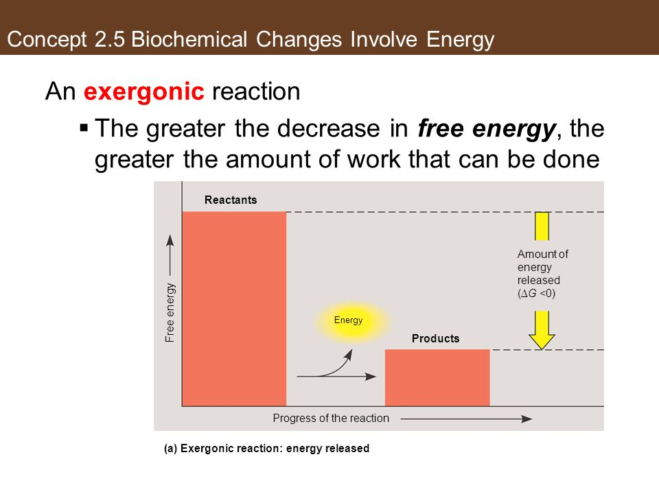 An exergonic reaction The greater the decrease in free energy, the greater the amount of work that can be done Reactants Products Energy Progress of t