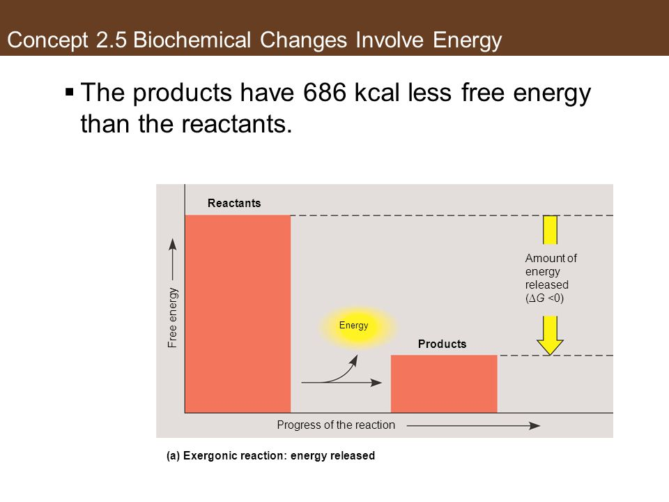 The products have 686 kcal less free energy than the reactants. Reactants Products Energy Progress of the reaction Amount of energy released (G <0) Fr