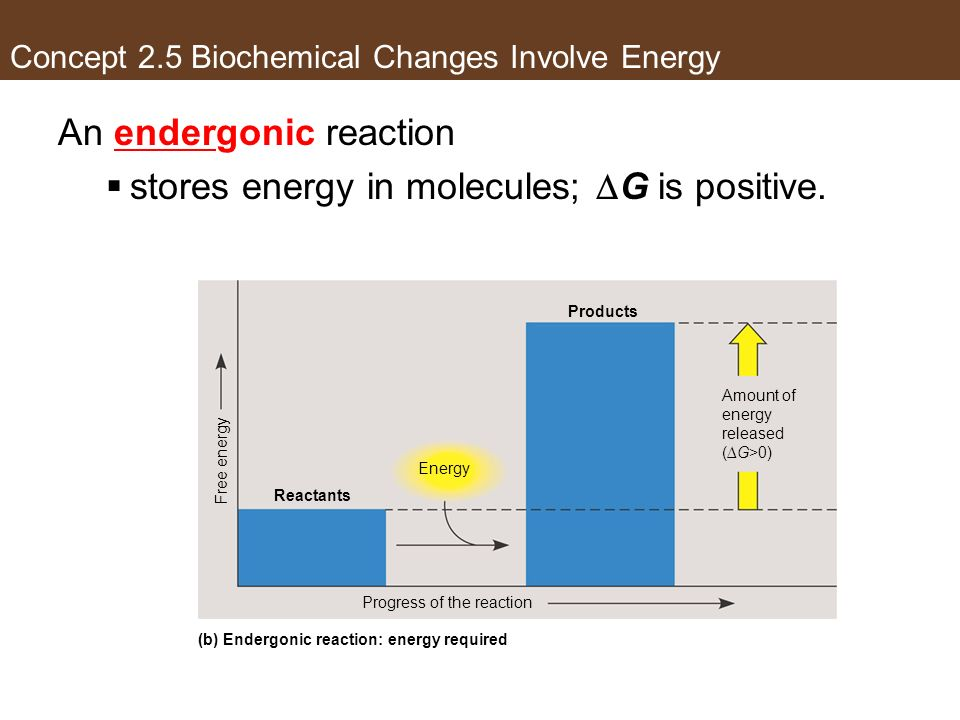 An endergonic reaction stores energy in molecules; G is positive. Energy Products Amount of energy released (G>0) Reactants Progress of the reaction F
