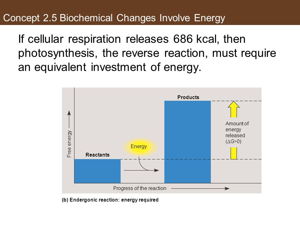 If cellular respiration releases 686 kcal, then photosynthesis, the reverse reaction, must require an equivalent investment of energy. Energy Products