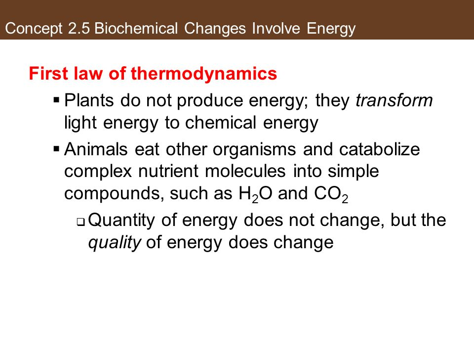 Concept 2.5 Biochemical Changes Involve Energy First law of thermodynamics Plants do not produce energy; they transform light energy to chemical energ