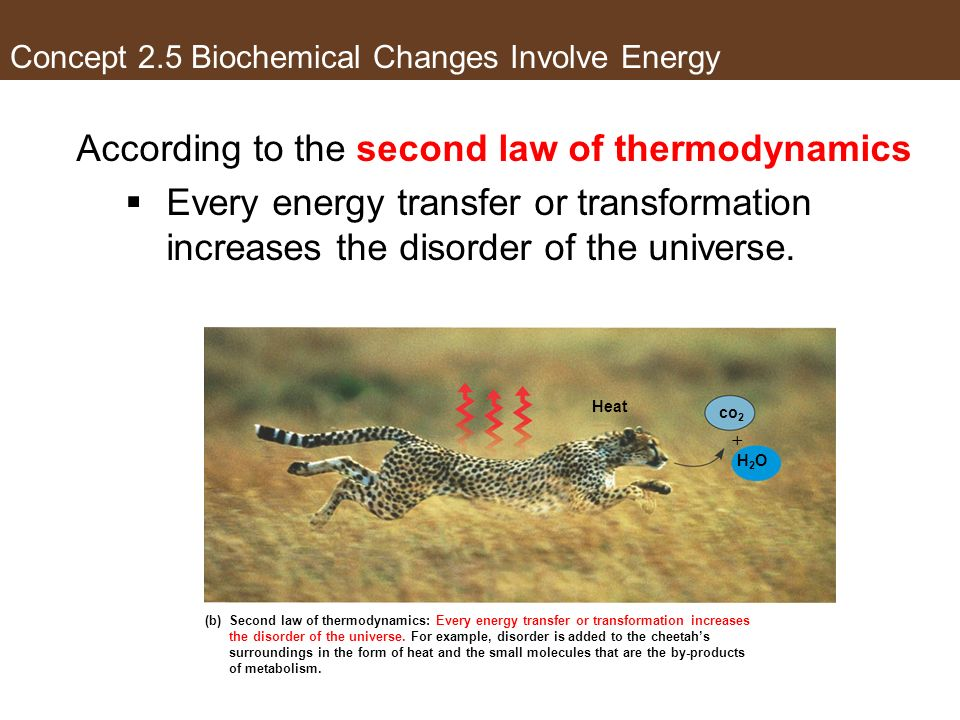 Concept 2.5 Biochemical Changes Involve Energy According to the second law of thermodynamics Every energy transfer or transformation increases the dis