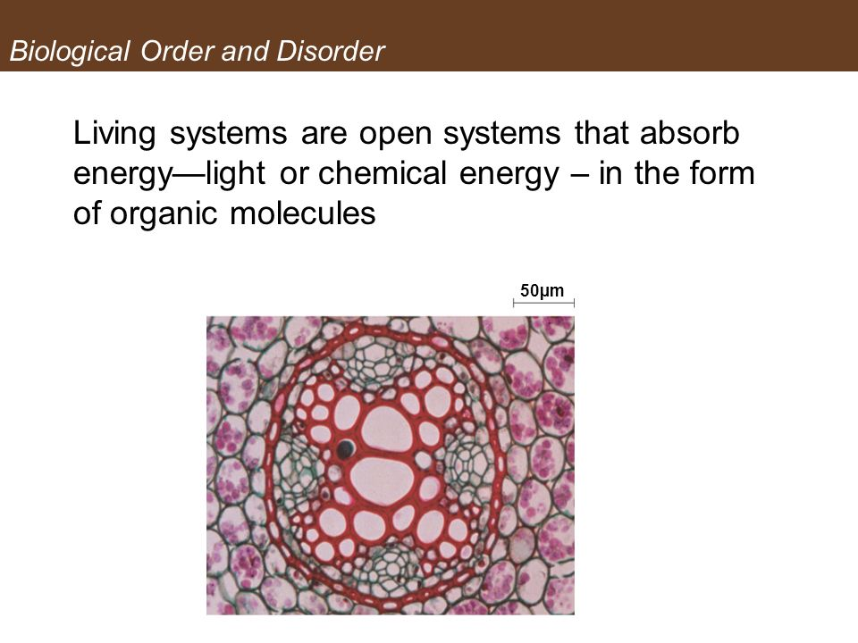 Biological Order and Disorder Living systems are open systems that absorb energylight or chemical energy – in the form of organic molecules 50µm