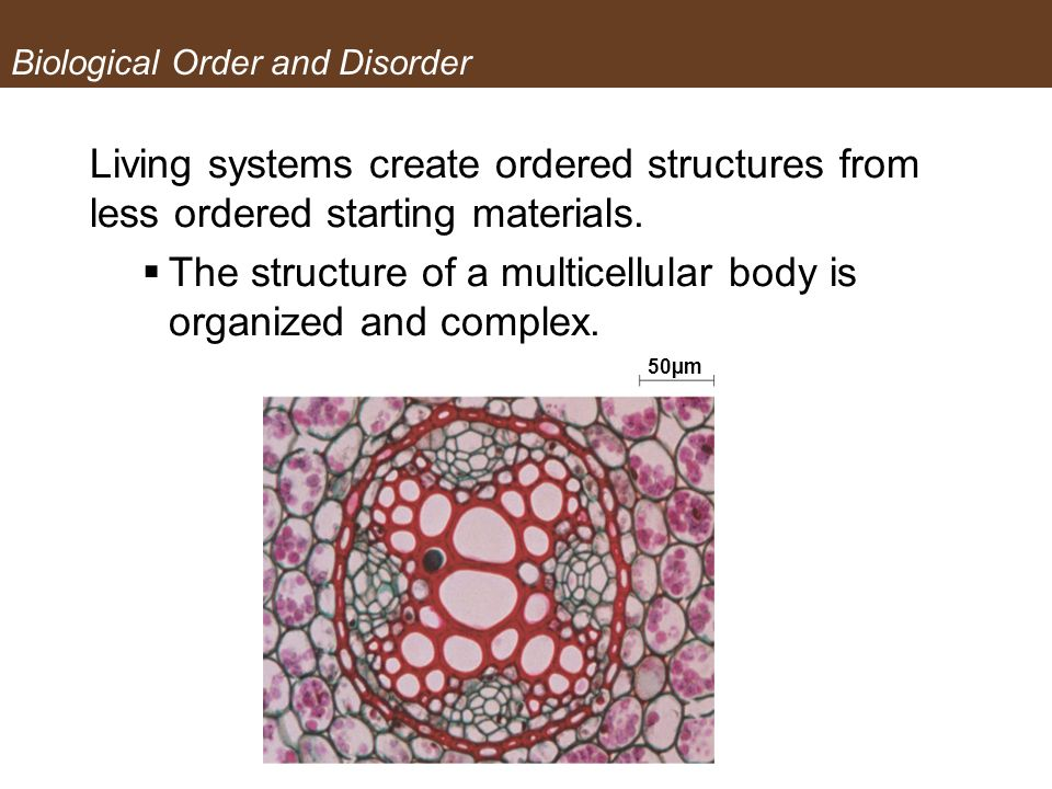 Biological Order and Disorder Living systems create ordered structures from less ordered starting materials. The structure of a multicellular body is