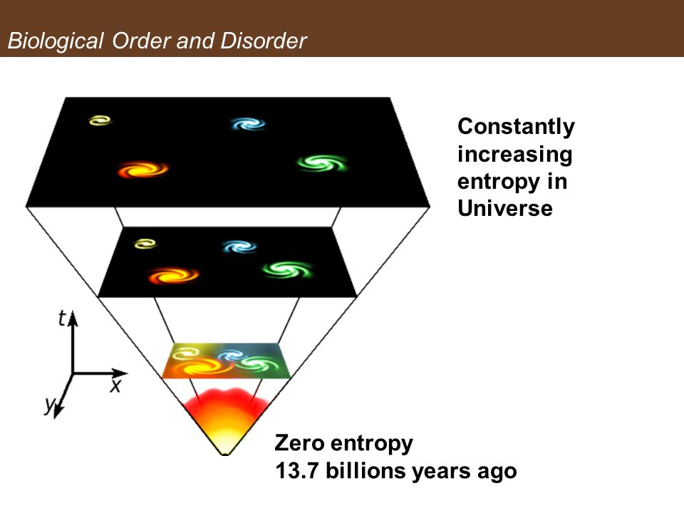 Biological Order and Disorder Zero entropy 13.7 billions years ago Constantly increasing entropy in Universe Biological Order and Disorder