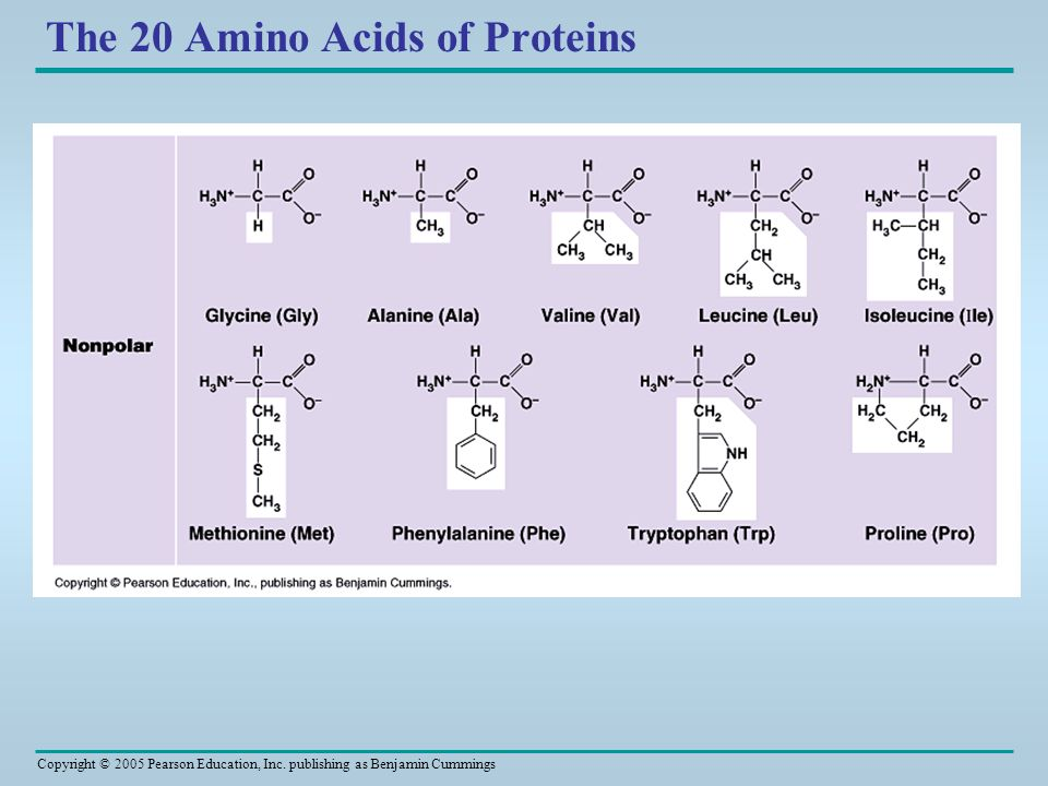 Copyright © 2005 Pearson Education, Inc. publishing as Benjamin Cummings The 20 Amino Acids of Proteins