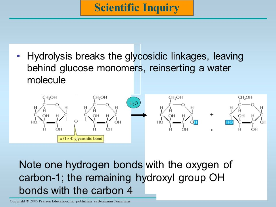 Copyright © 2005 Pearson Education, Inc. publishing as Benjamin Cummings H2OH2O Scientific Inquiry Hydrolysis breaks the glycosidic linkages, leaving