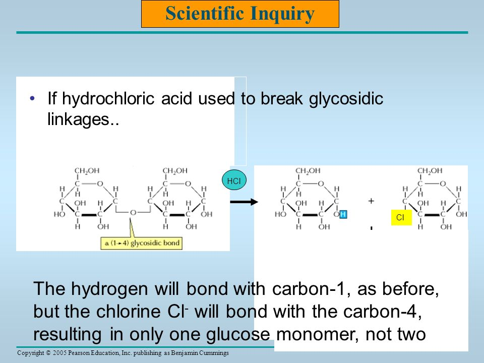 Copyright © 2005 Pearson Education, Inc. publishing as Benjamin Cummings HCl Scientific Inquiry If hydrochloric acid used to break glycosidic linkages