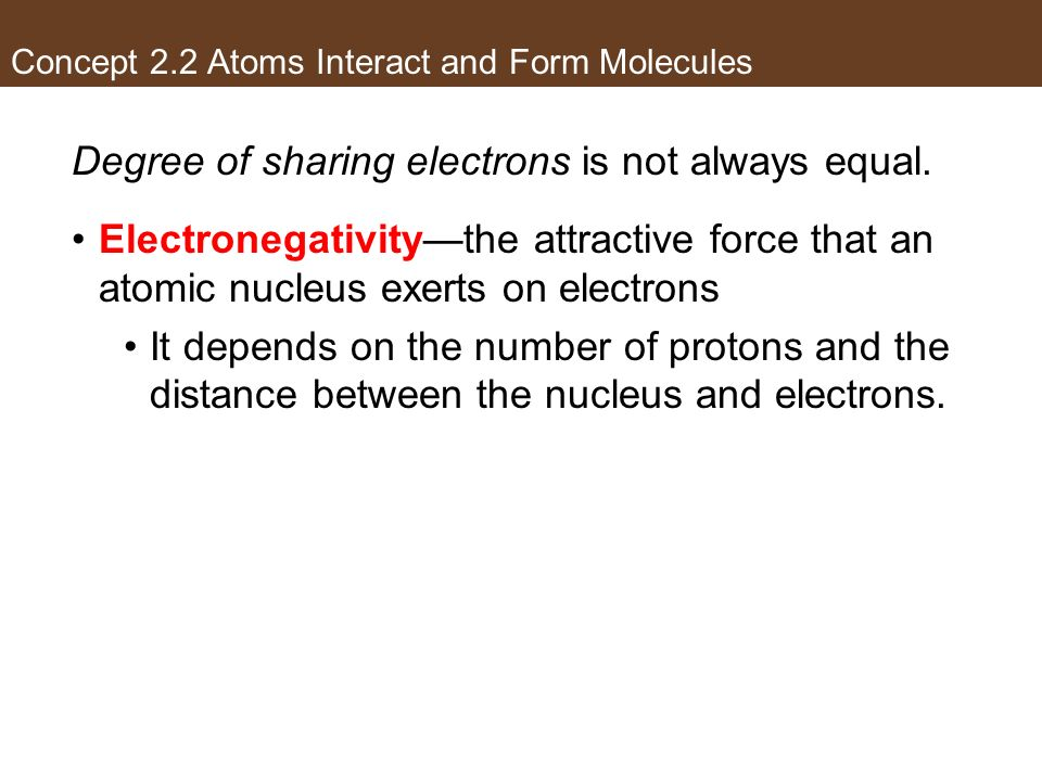 Concept 2.2 Atoms Interact and Form Molecules Degree of sharing electrons is not always equal. Electronegativitythe attractive force that an atomic nu
