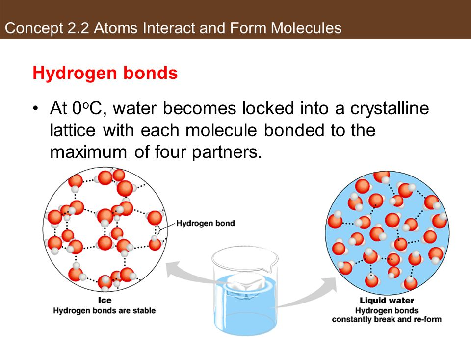 Hydrogen bonds At 0 o C, water becomes locked into a crystalline lattice with each molecule bonded to the maximum of four partners.