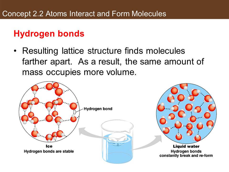 Hydrogen bonds Resulting lattice structure finds molecules farther apart. As a result, the same amount of mass occupies more volume.