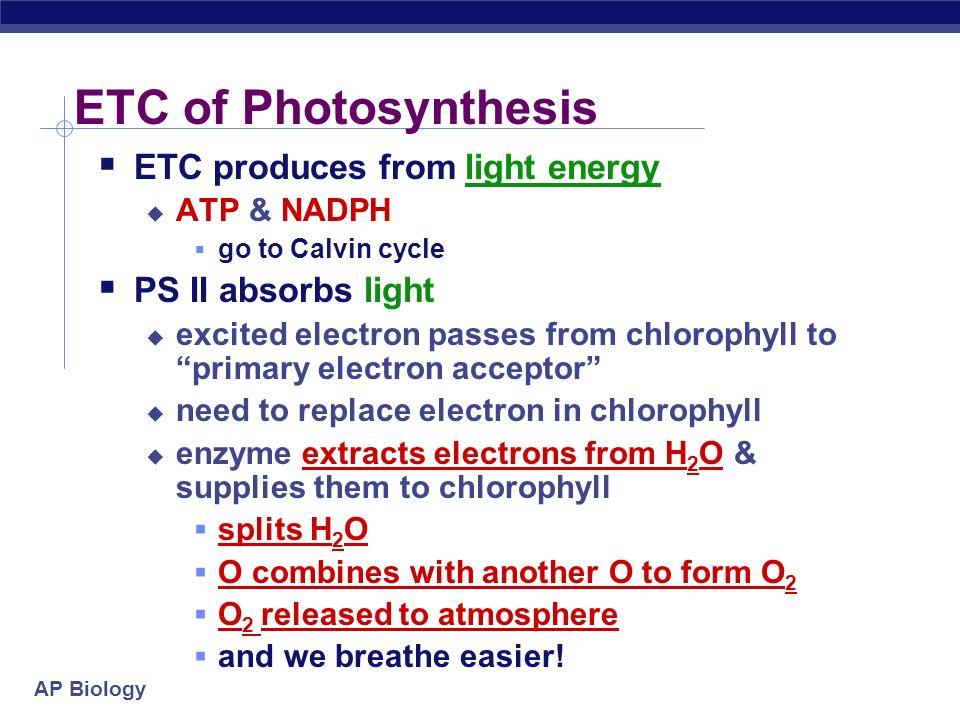 AP Biology ETC of Photosynthesis split H 2 O