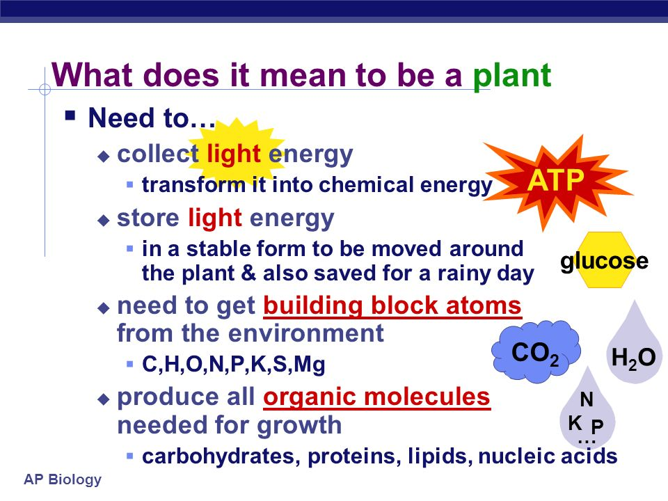 AP Biology H2OH2O Energy cycle Photosynthesis Cellular Respiration sun glucose O2O2 CO 2 plants animals, plants ATP The Great Circle of Life,Mufasa!