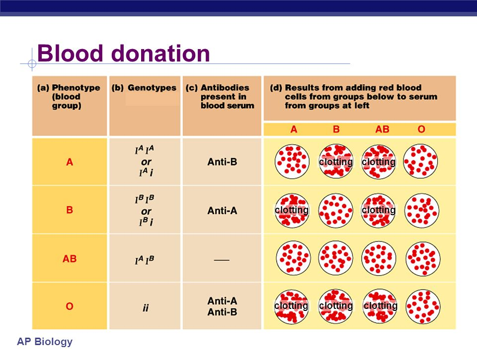 AP Biology Blood type blood type antigen on RBC antibodies in blood donation status A type A antigens on surface of RBC anti-B antibodies __ B type B