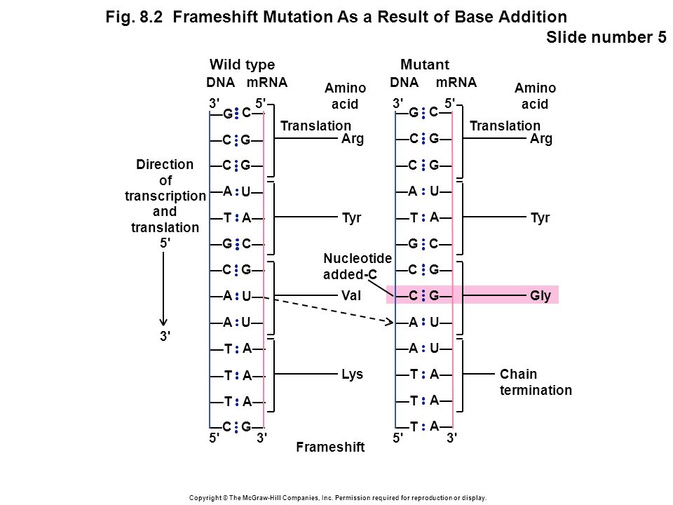 Copyright © The McGraw-Hill Companies, Inc. Permission required for reproduction or display. Fig. 8.2 Frameshift Mutation As a Result of Base Addition