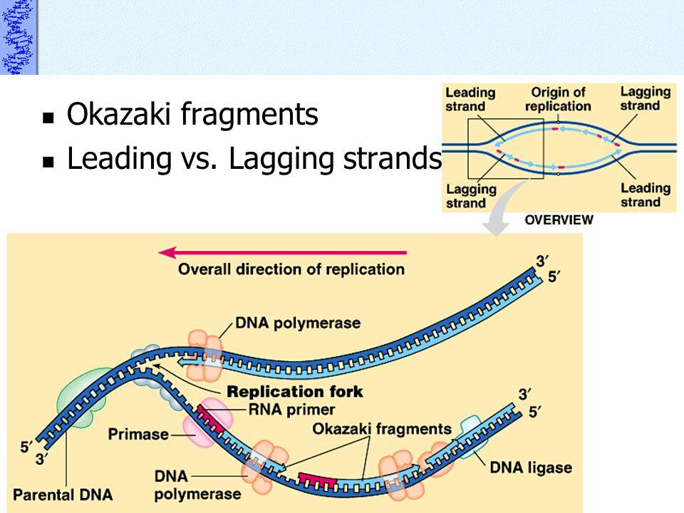 Okazaki fragments Leading vs. Lagging strands