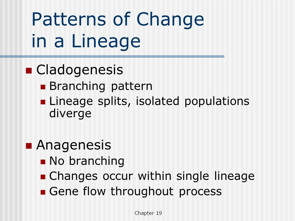 Chapter 19 Patterns of Change in a Lineage Cladogenesis Branching pattern Lineage splits, isolated populations diverge Anagenesis No branching Changes