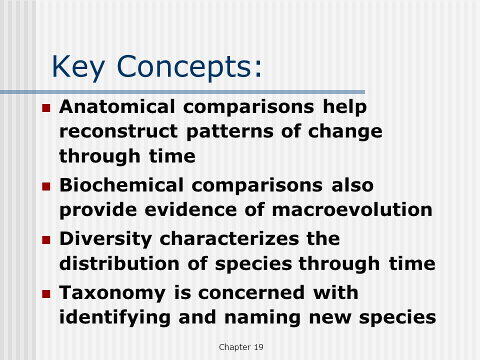 Chapter 19 Key Concepts: Anatomical comparisons help reconstruct patterns of change through time Biochemical comparisons also provide evidence of macr