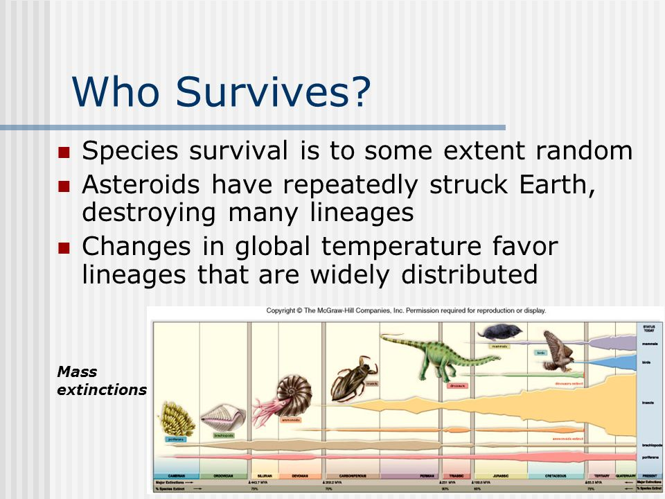 Chapter 19 Who Survives? Species survival is to some extent random Asteroids have repeatedly struck Earth, destroying many lineages Changes in global