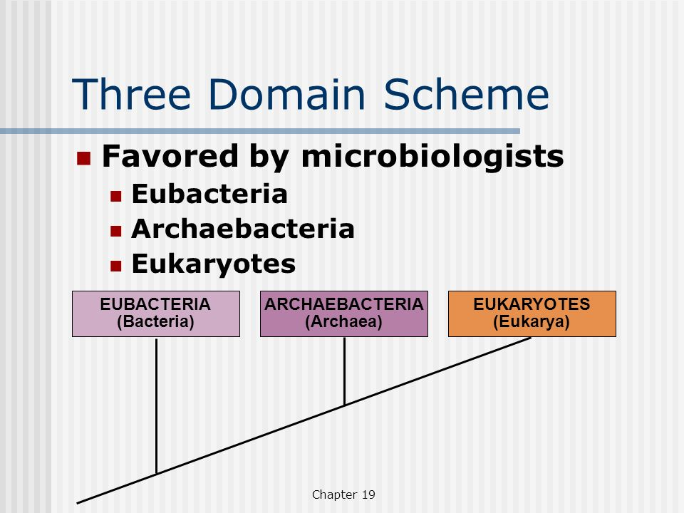 Chapter 19 Three Domain Scheme Favored by microbiologists Eubacteria Archaebacteria Eukaryotes EUBACTERIA (Bacteria) ARCHAEBACTERIA (Archaea) EUKARYOT