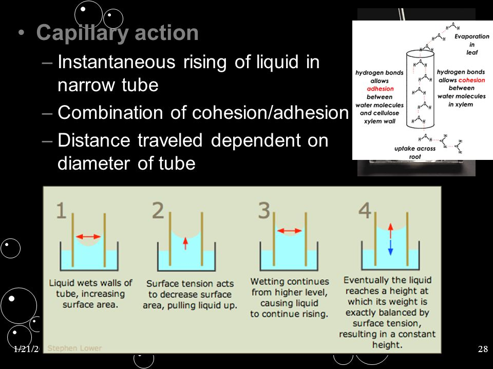 1/21/201428 Capillary actionCapillary action – –Instantaneous rising of liquid in narrow tube – –Combination of cohesion/adhesion – –Distance traveled