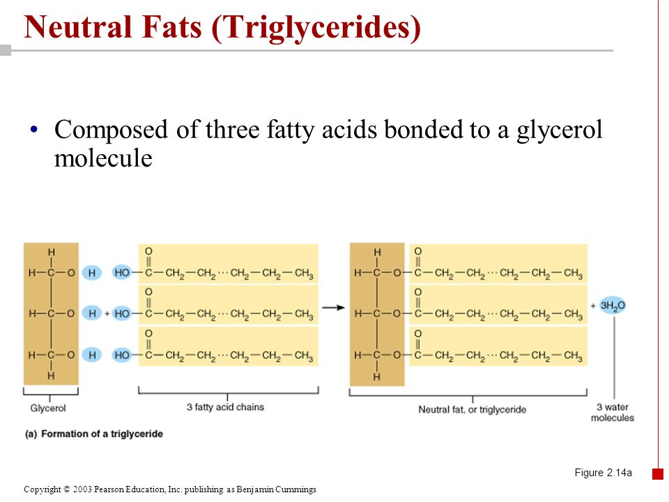 Copyright © 2003 Pearson Education, Inc. publishing as Benjamin Cummings Neutral Fats (Triglycerides) Composed of three fatty acids bonded to a glycer