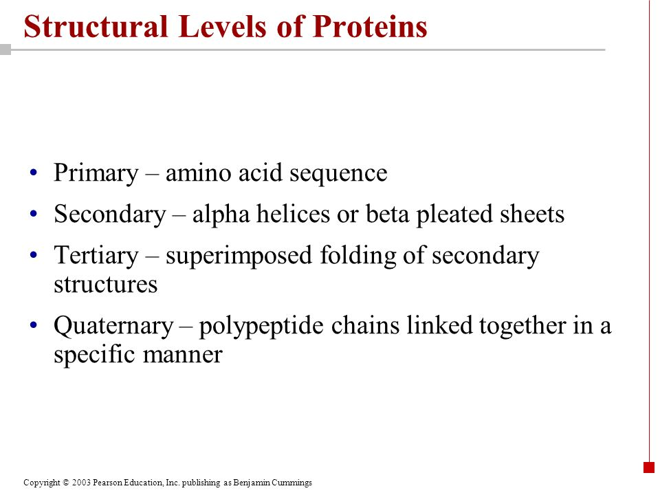 Copyright © 2003 Pearson Education, Inc. publishing as Benjamin Cummings Structural Levels of Proteins Primary – amino acid sequence Secondary – alpha