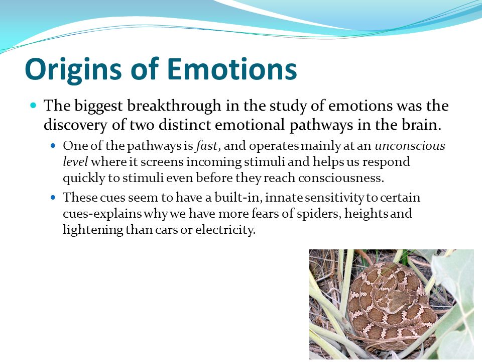 Origins of Emotions The biggest breakthrough in the study of emotions was the discovery of two distinct emotional pathways in the brain. One of the pa