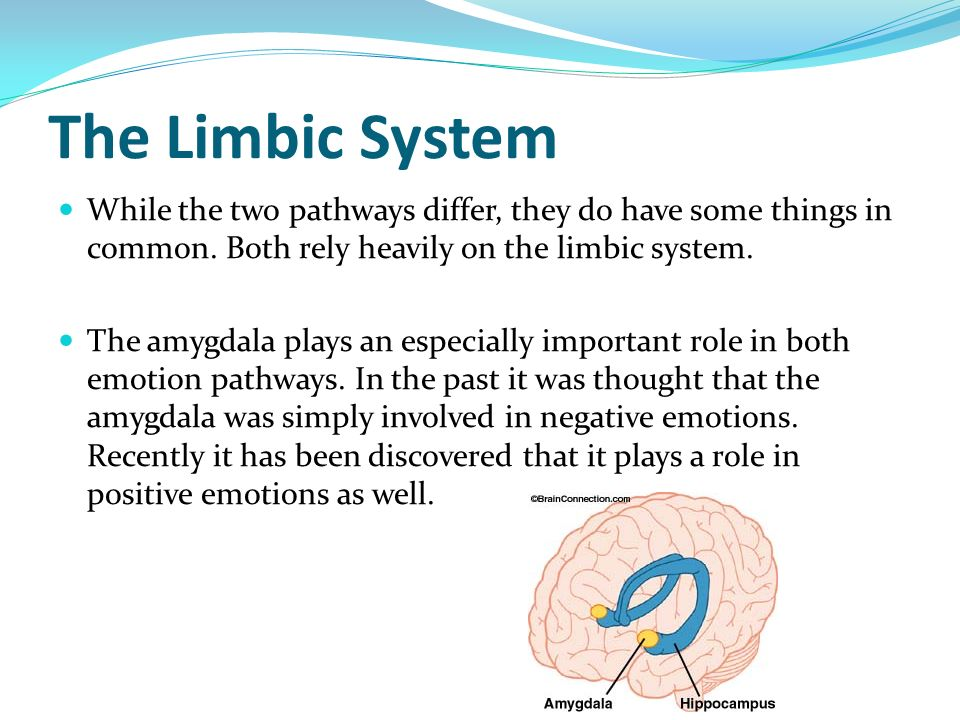 The Limbic System While the two pathways differ, they do have some things in common. Both rely heavily on the limbic system. The amygdala plays an esp