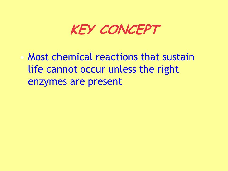 KEY CONCEPT Most chemical reactions that sustain life cannot occur unless the right enzymes are present
