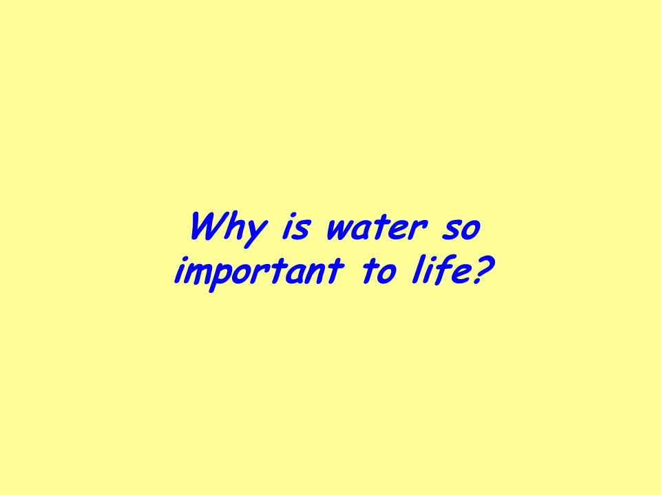 Why is water so important to life?