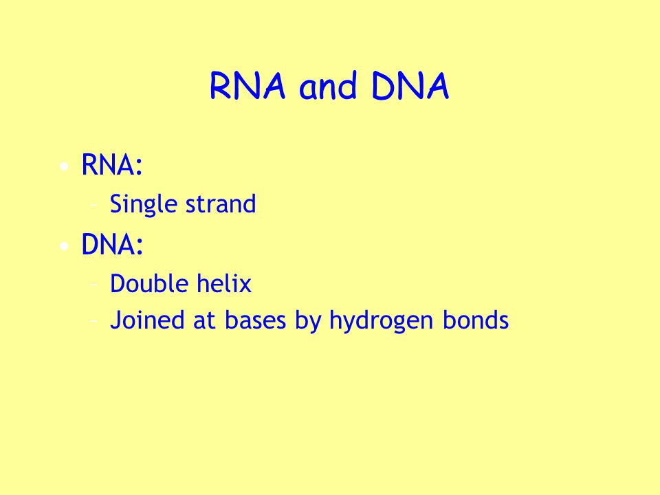 RNA and DNA RNA: –Single strand DNA: –Double helix –Joined at bases by hydrogen bonds