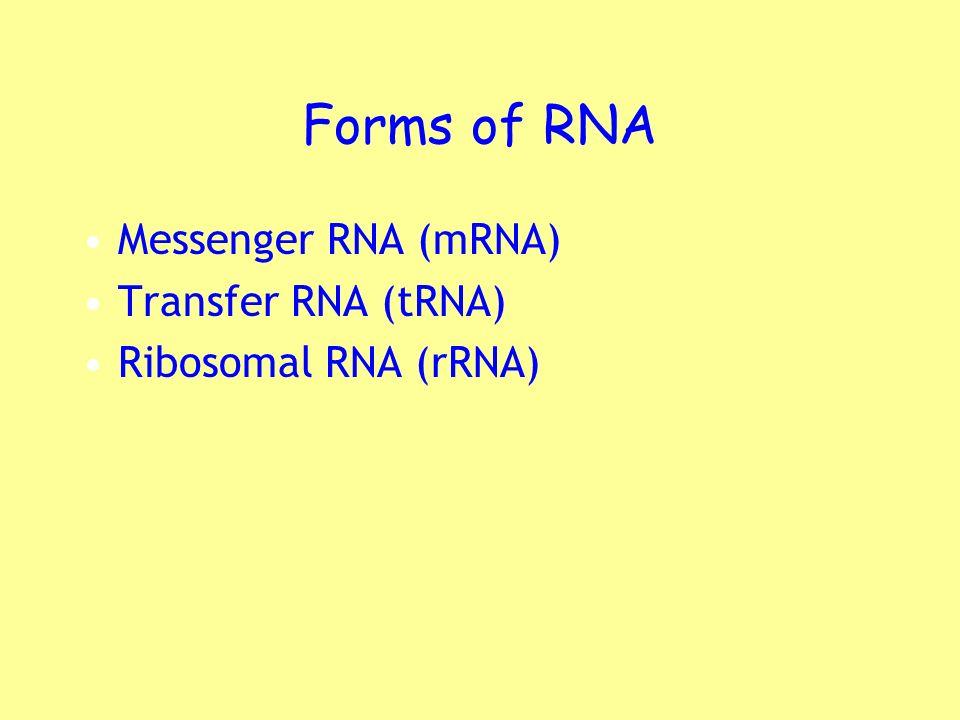 Forms of RNA Messenger RNA (mRNA) Transfer RNA (tRNA) Ribosomal RNA (rRNA)