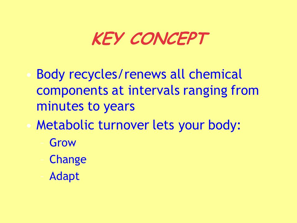 KEY CONCEPT Body recycles/renews all chemical components at intervals ranging from minutes to years Metabolic turnover lets your body: –Grow –Change –