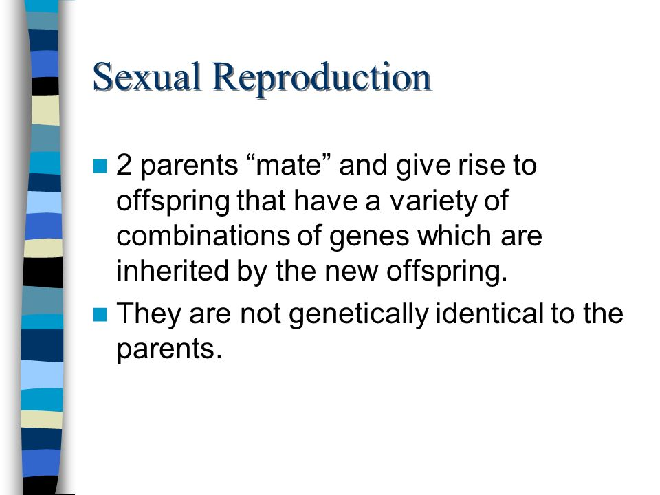 Sexual Reproduction 2 parents mate and give rise to offspring that have a variety of combinations of genes which are inherited by the new offspring. T