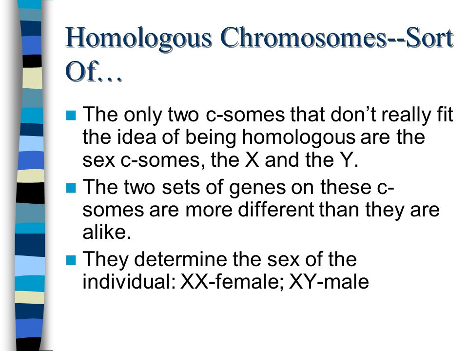 Homologous Chromosomes--Sort Of… The only two c-somes that dont really fit the idea of being homologous are the sex c-somes, the X and the Y. The two