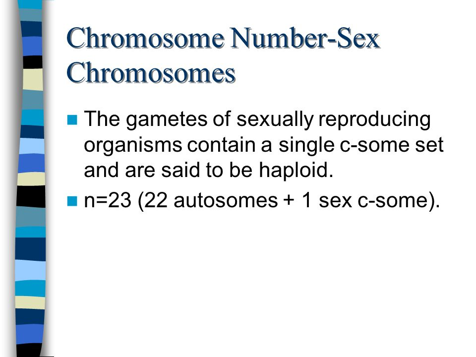 Chromosome Number-Sex Chromosomes The gametes of sexually reproducing organisms contain a single c-some set and are said to be haploid. n=23 (22 autos